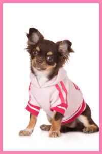 Chihuaha knitted jumper