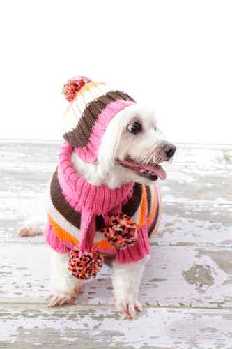 hand knitted dog jumper and hat